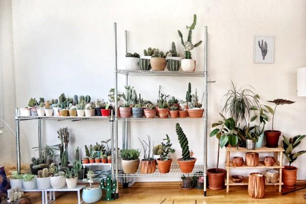 Как расставить домашние растения по комнатам, чтобы было хорошо: отрывок из книги «Окей, джунгли!»