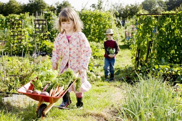Долгожители: 10 овощей, которые можно хранить месяцами