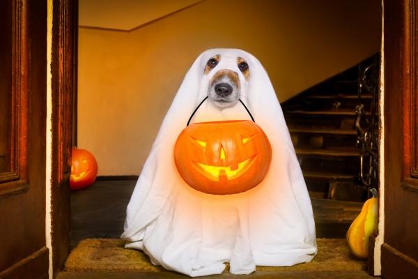 Как украсить дом к Хэллоуину: 20 страшно красивых идей