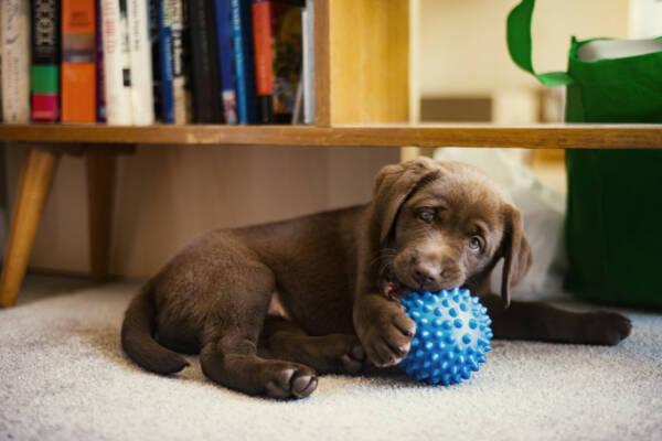 Резиновый мячик и еще 3 вида игрушек, которые опасны для собак