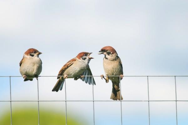 Почему сидящих на проводах птиц не убивает током