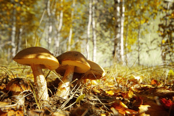 Какие грибы можно собрать в октябре: где искать, что приготовить
