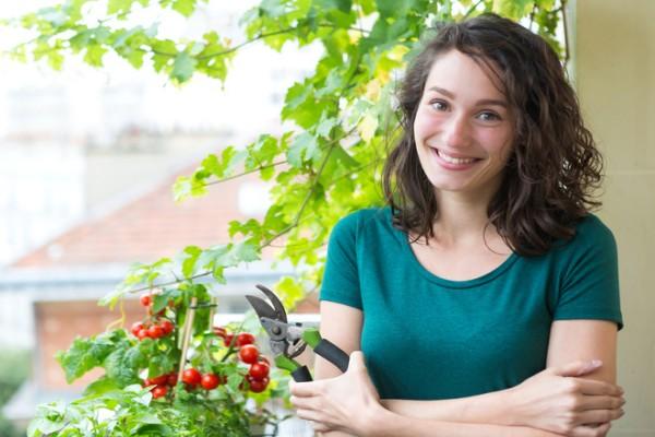 Как вырастить помидоры на балконе: инструкция для хозяюшек