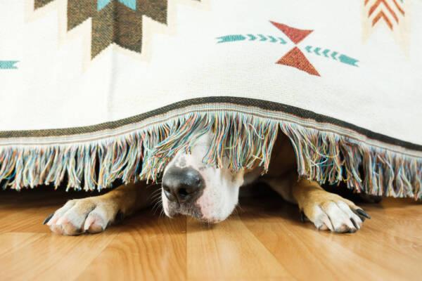 Чего боятся собаки: темнота, поездки и еще 3 главных страха