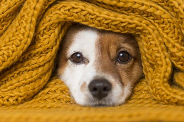 Холод собачий: 10 пород собак, которые очень мерзнут зимой