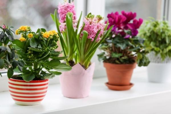 10 комнатных растений, которые творят чудеса