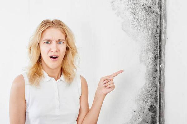 Как убрать плесень в квартире?