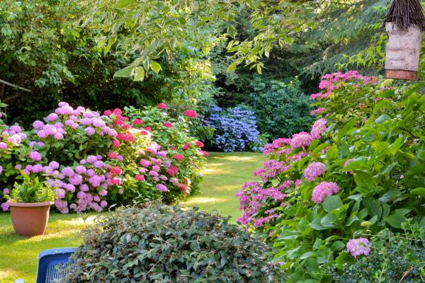 Советы опытных дачников для красивого сада