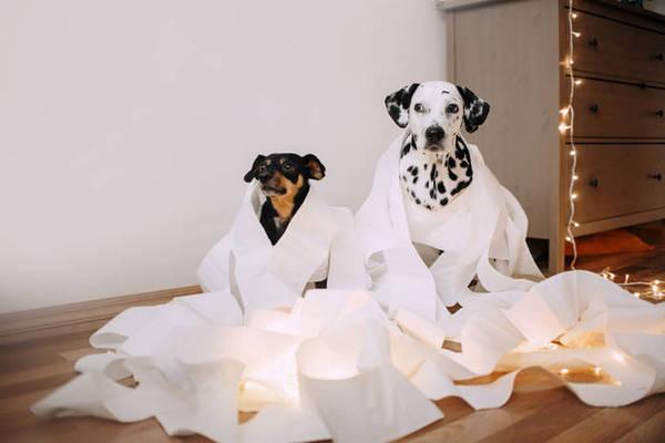 Неожиданные способы использования бумажных полотенец