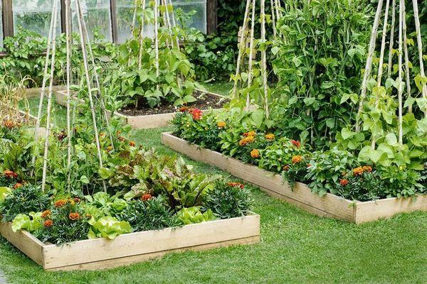 5 ошибок в огороде с приподнятыми грядками и как их избежать