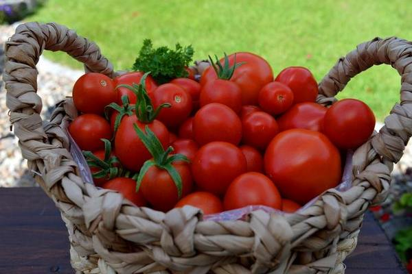 Выращивание помидоров по принципу увеличения урожая: томатные правила 2021