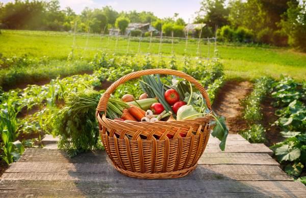 Огород своими руками