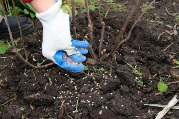Эти простые действия помогут обеспечить вам урожайный сезон