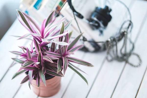 ТОП-7 натуральных удобрений для комнатных цветов