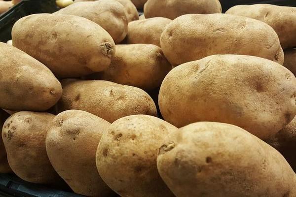 Как прорастить картофель для посадки – 5 способов на выбор