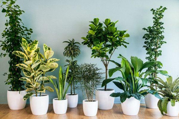 Комнатные растения очищают воздух в помещении