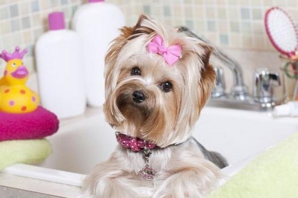 Быстрая и профессиональная стрижка собак с выездом на дом