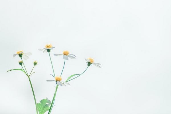 Когда уместно и не уместно дарить цветы?
