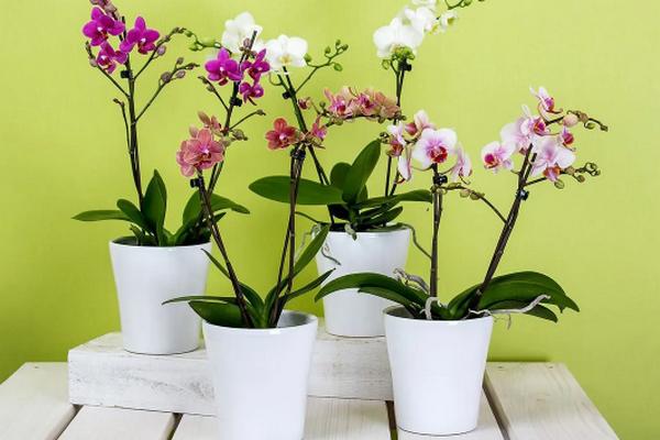 Несколько советов, как подготовить домашние растения до весны