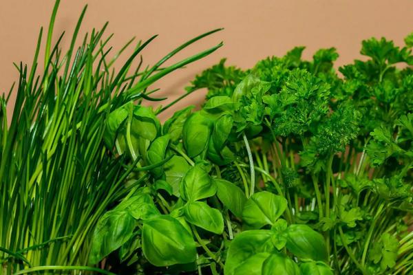 Какие бывают разновидности зелени, чем она полезна и как ее лучше употреблять