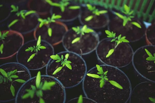 Почему кислая почва плохо подходит для выращивания рассады