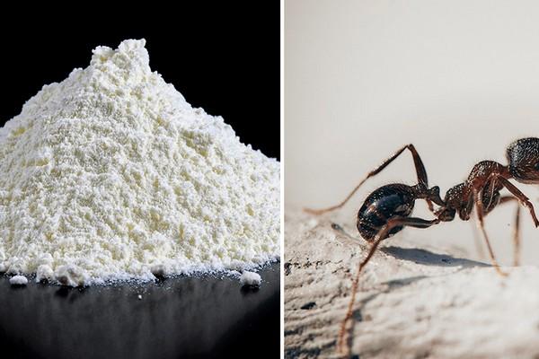 Малоизвестный совет с мукой, который решит проблему с муравьями в доме