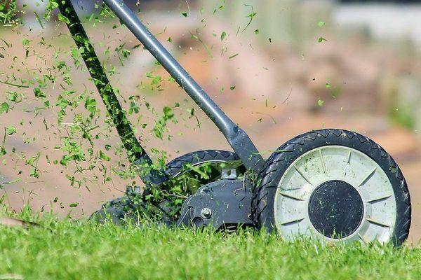 3 грубые ошибки в уходе за газоном, которые всё только портят