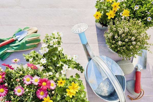 Вечное лето: 5 долгоцветущих растений для сада
