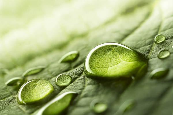 Почему в организме накапливается лишняя жидкость, и как ее вывести